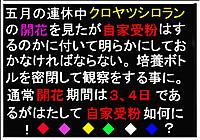 Kuro3_2